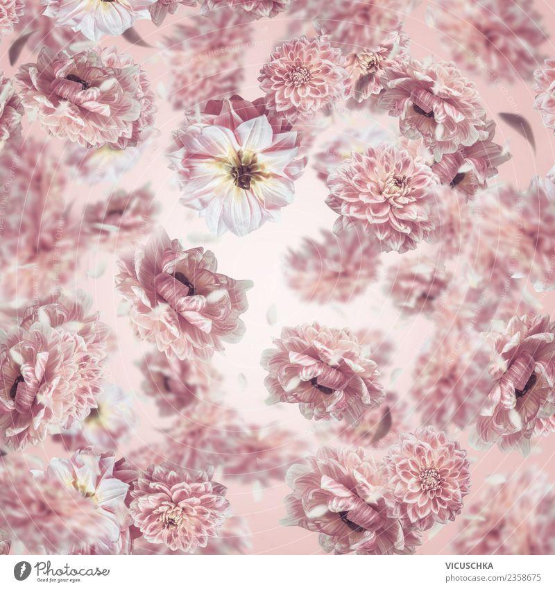 Pastell rosa Blumen Hintergrund Sommer Pflanze Blatt Hintergrundbild Blüte Stil Feste & Feiern Design Dekoration & Verzierung Blumenstrauß fallen fliegend