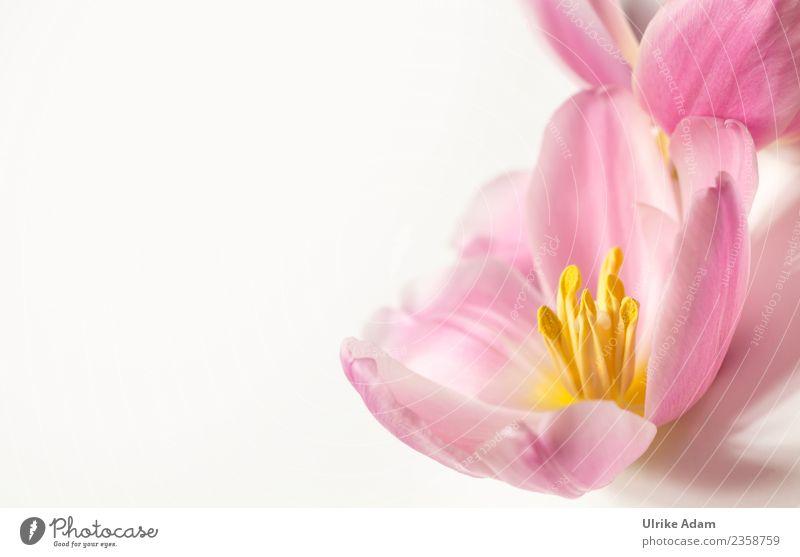 Rosa Blüten Design Wellness Leben harmonisch Wohlgefühl Zufriedenheit Erholung ruhig Meditation Spa Massage Valentinstag Muttertag Ostern Hochzeit Geburtstag