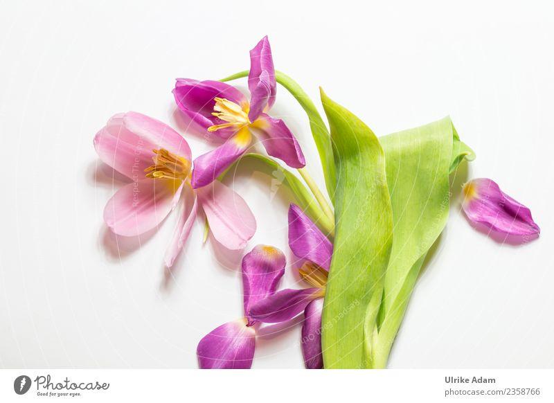 Frühling - Tulpen Arrangement elegant Design Wellness Leben harmonisch Wohlgefühl Zufriedenheit Erholung ruhig Meditation Muttertag Ostern Hochzeit Geburtstag