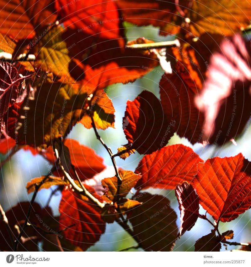 Frühlingsfest Umwelt Natur Pflanze Schönes Wetter Baum ästhetisch natürlich chaotisch Farbe Idylle Stimmung Wandel & Veränderung Farbfoto mehrfarbig