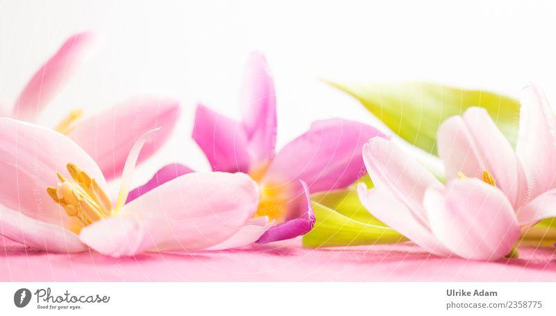 Wellness mit rosa Tulpenblüten Design Leben harmonisch Wohlgefühl Zufriedenheit Erholung ruhig Meditation Spa Massage Schwimmbad Bild Muster Muttertag Ostern