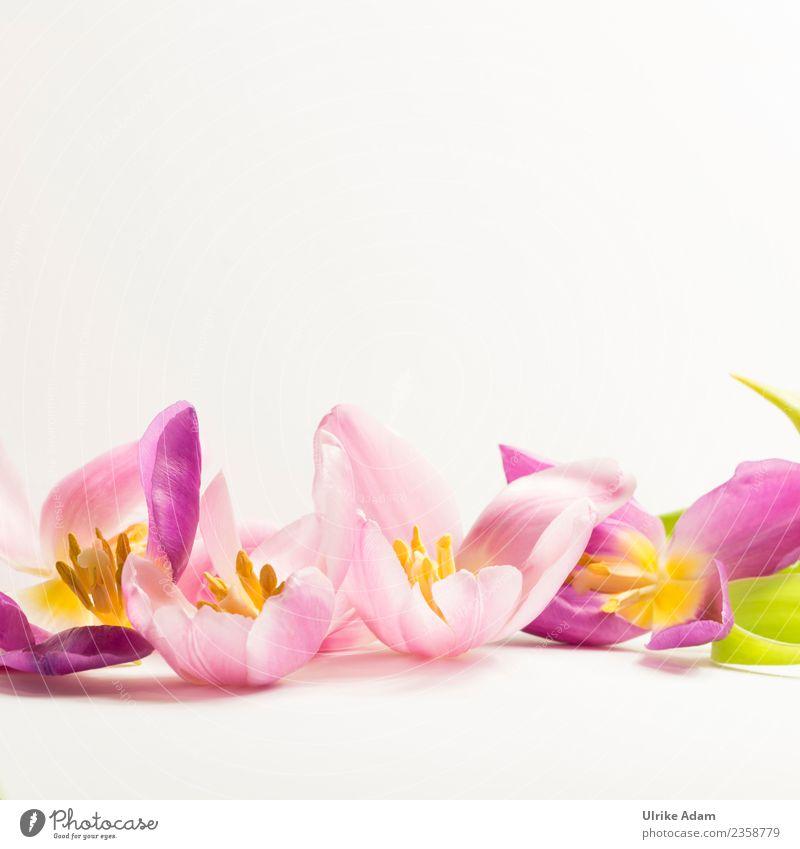 Wellness mit rosa Tulpenblüten elegant Design schön Leben harmonisch Wohlgefühl Zufriedenheit Sinnesorgane Erholung ruhig Meditation Spa Massage Schwimmbad