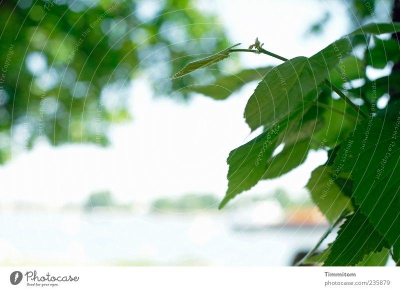 Blick auf den Rhein grün Baum Pflanze Blatt Frühling Wasserfahrzeug Fluss