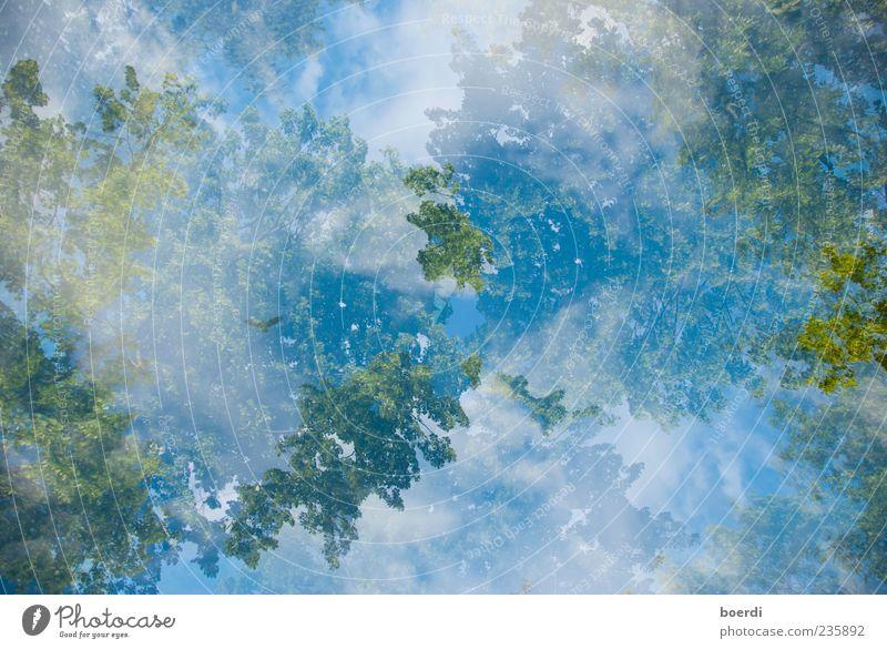 sUchbild Umwelt Natur Pflanze Himmel Wolken Wetter Baum blau grün Stimmung Frühlingsgefühle Kunst Perspektive Doppelbelichtung verschwimmen Landschaft Farbfoto