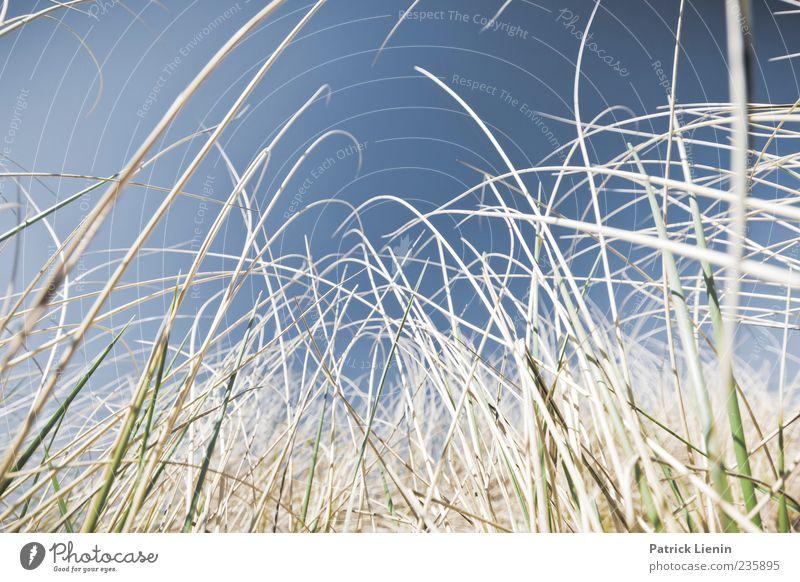 We are going to the beach Himmel Natur blau schön Ferien & Urlaub & Reisen Pflanze Sommer Strand Erholung Umwelt oben Freiheit Sand Luft Wetter einzigartig