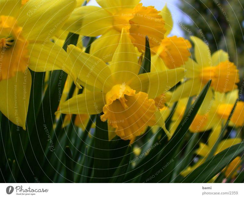 frühling1 Blüte Blume Frühling