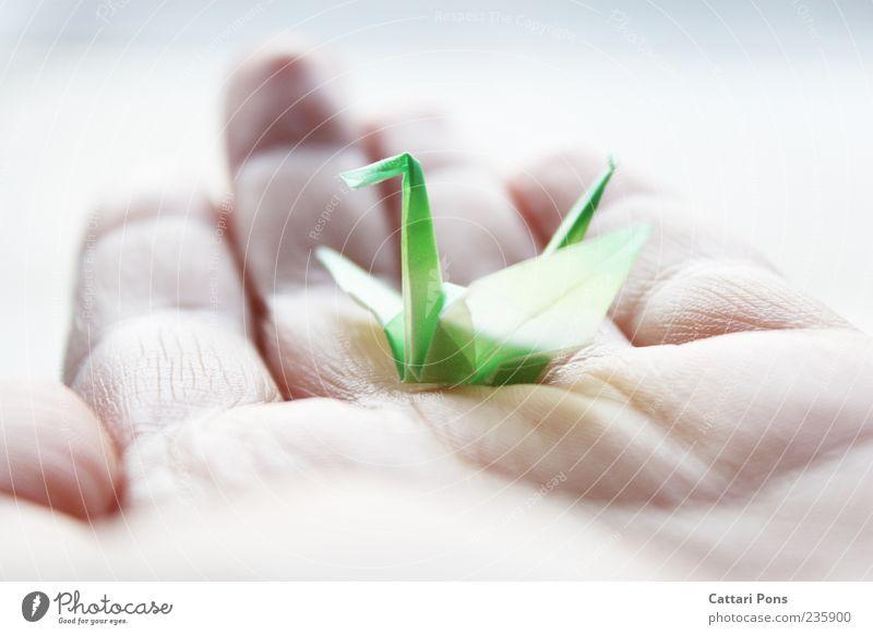 fly away... Hand grün Tier klein hell Vogel Finger Papier einzigartig nah zart dünn zeigen leicht Leichtigkeit Schwan
