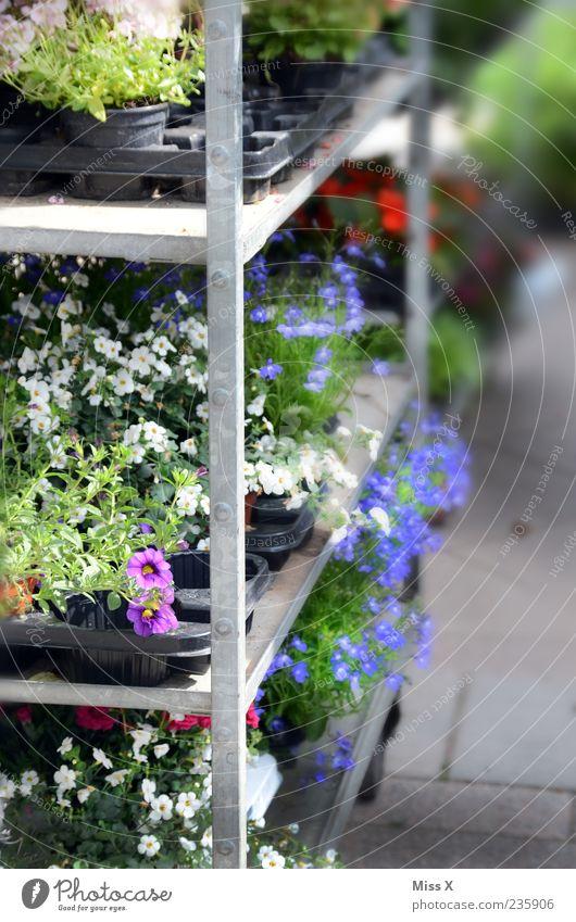 Blumenhändler Pflanze Sommer Blatt Frühling Blüte kaufen Wachstum Blühend Duft verkaufen Grünpflanze Topfpflanze Marktstand