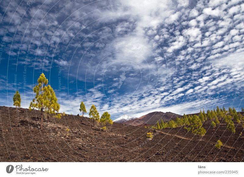 wolkenziehen Umwelt Natur Landschaft Urelemente Erde Himmel Wolken Schönes Wetter Pflanze Baum Gipfel Schneebedeckte Gipfel Vulkan außergewöhnlich bizarr