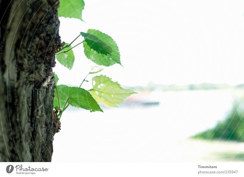 Ein Traum... von dem ein Gefühl, eine Ahnung zurück bleibt Himmel Wasser grün Baum Pflanze Blatt Frühling Wasserfahrzeug Zufriedenheit elegant natürlich ästhetisch Wachstum Fluss Gelassenheit Schifffahrt
