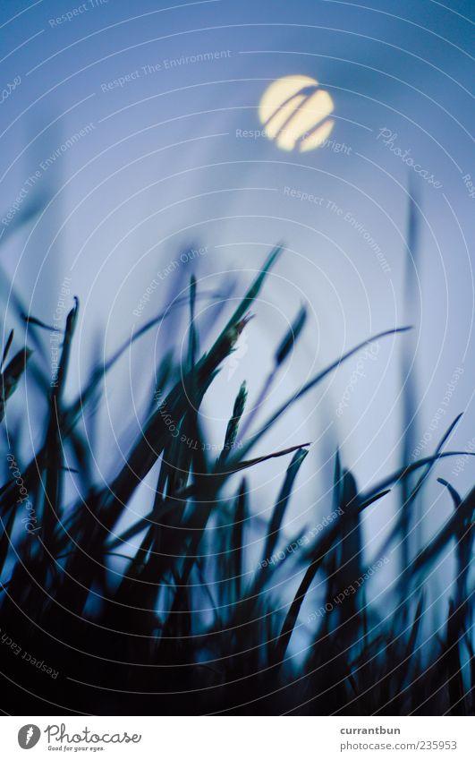 i can see uranus Kugel ästhetisch Idylle Vergänglichkeit Gras Grasland Mond Unschärfe Halm blau grün Farbfoto Gedeckte Farben Abend Dämmerung Froschperspektive