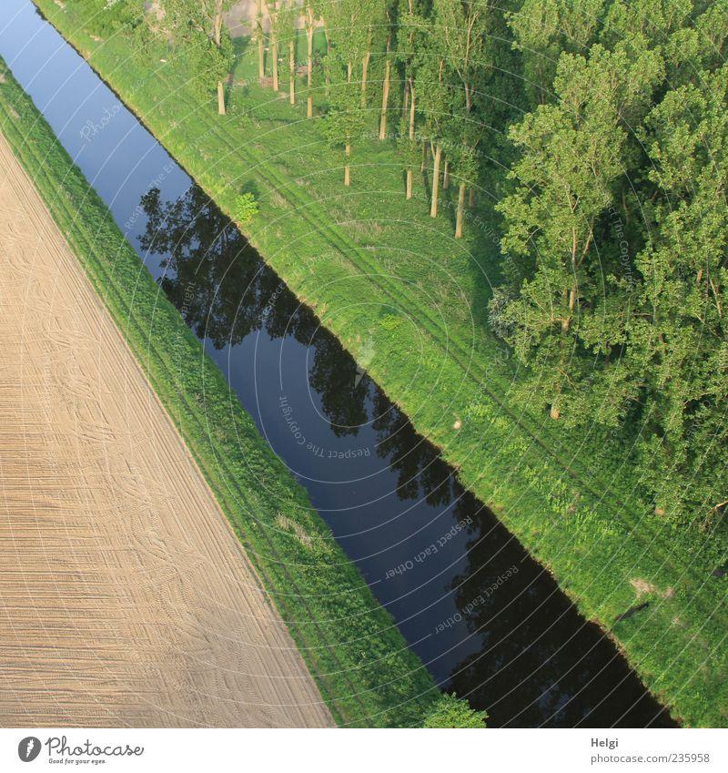 Schluss mit Lustig... Freizeit & Hobby Umwelt Natur Landschaft Pflanze Erde Wasser Frühling Schönes Wetter Baum Gras Feld Wald Flussufer Wachstum ästhetisch