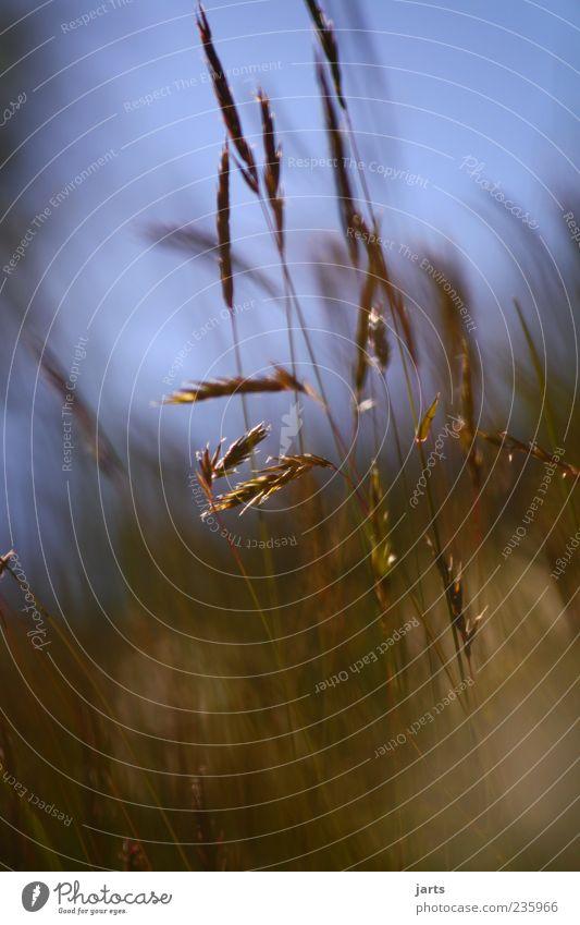 nature Umwelt Natur Pflanze Schönes Wetter Gras frisch natürlich Optimismus ruhig Farbfoto Außenaufnahme Nahaufnahme Menschenleer Tag Licht Getreide