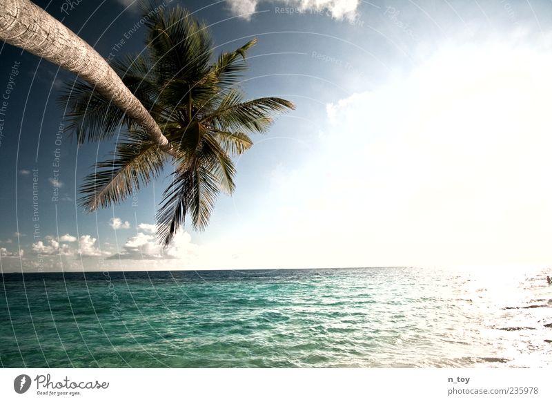 Lichtsüchtig Himmel Natur Wasser Ferien & Urlaub & Reisen Pflanze Sonne Meer Sommer ruhig Ferne Umwelt Landschaft Wärme Stimmung Horizont Insel