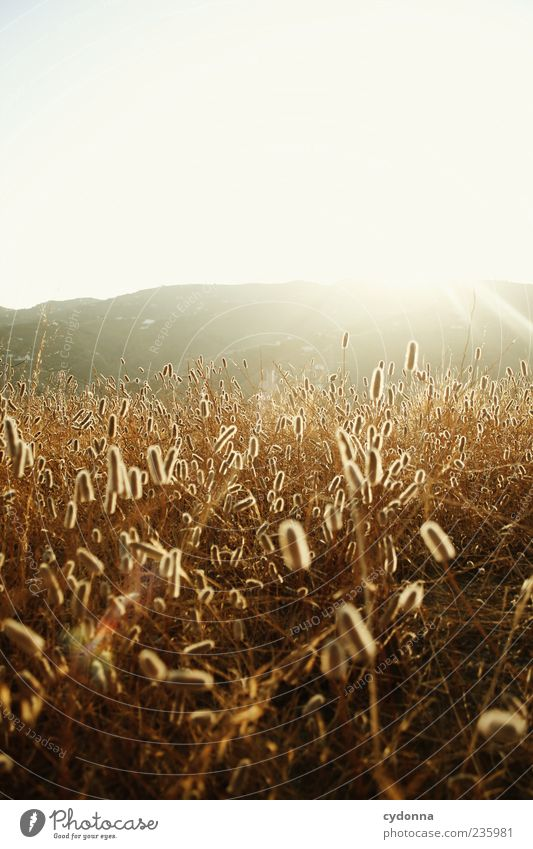 Beauty Himmel Natur schön Ferien & Urlaub & Reisen Pflanze Sommer Einsamkeit ruhig Ferne Erholung Umwelt Landschaft Wiese Berge u. Gebirge Wärme Freiheit