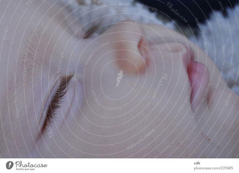 Schlaf Kindlein, schlaf. Mensch Baby Kindheit Gesicht Auge Nase Mund 1 0-12 Monate liegen schlafen klein nah friedlich Farbfoto Außenaufnahme Makroaufnahme