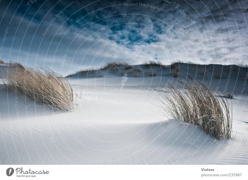 Spiekeroog | ......Fernweh Natur blau weiß Ferien & Urlaub & Reisen Sommer Strand Wolken Ferne Erholung Landschaft Freiheit Sand Insel Tourismus Nordsee Meer