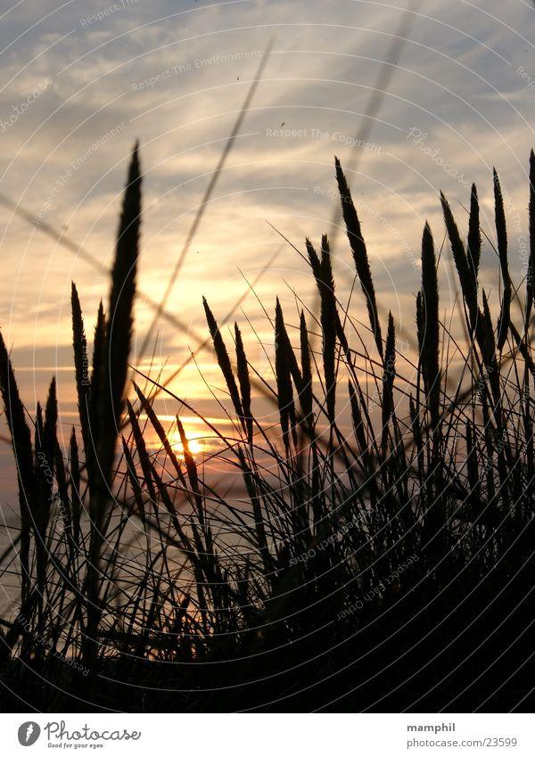 Sunset in Denmark #2 Gras Sonnenuntergang Strand Meer Agger Vestervig Stranddüne Wasser Nordsee Dänemark x