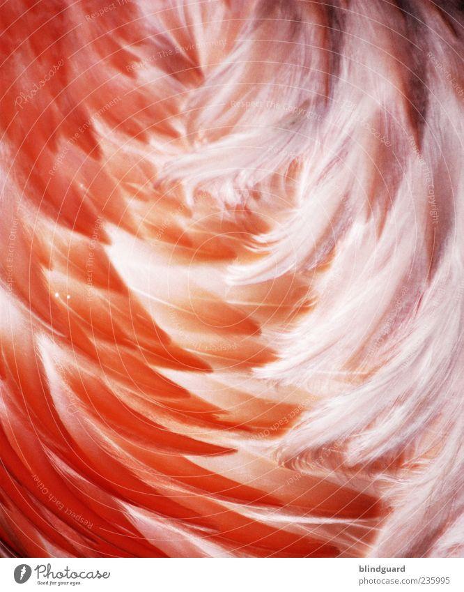 Mädchenbild weiß Tier orange rosa Wildtier Feder weich zart trocken Zoo Metallfeder Vogel gefiedert Flamingo Metallwaren