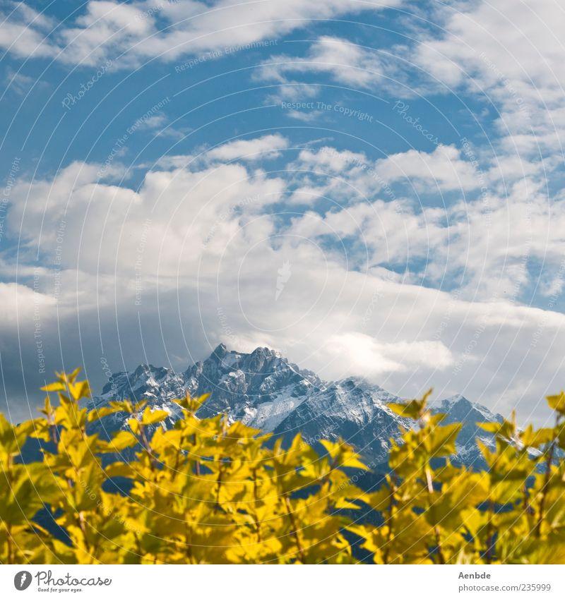 Pflanze, Berg und Himmel Natur blau Ferien & Urlaub & Reisen Sommer Freude Ferne gelb Landschaft Berge u. Gebirge Glück Tourismus Sträucher Alpen Schönes Wetter