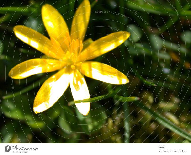 frühling2 Blüte Blume Frühling