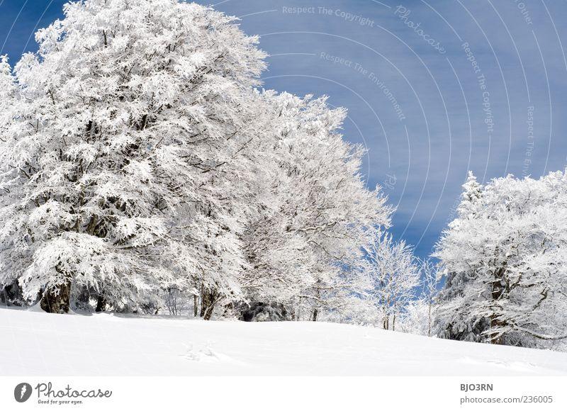 Schnee oberhalb von Freiburg Winter Schauinsland Südbaden Berge u. Gebirge kalt Landschaft Breisgau Himmel Wolken Klima Wetter Eis Frost blau grau weiß