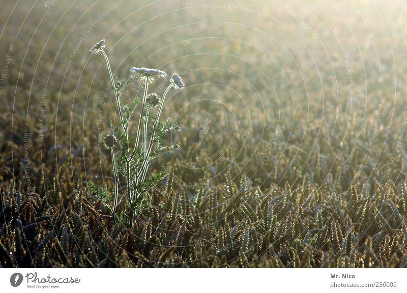 countryside Natur Pflanze Sommer Einsamkeit ruhig Umwelt Landschaft Leben Wärme Gras Zufriedenheit Feld wild Klima Wachstum Idylle