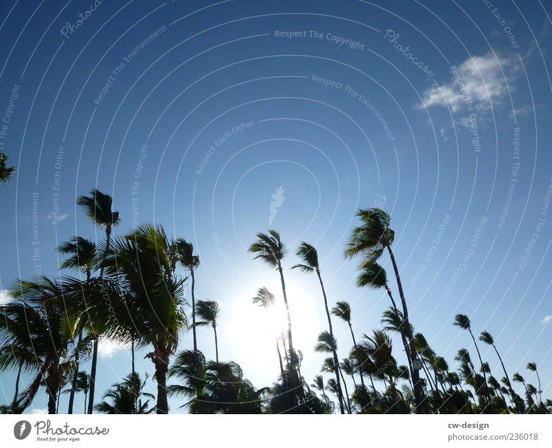 Ab in den Urlaub Natur Sonne Sommer Schönes Wetter Wind exotisch Palme Palmenstrand Palmenwedel Strand schön blau schwarz Sehnsucht Himmel himmelblau