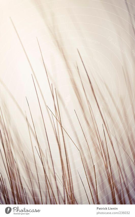 Spiekeroog   Harmonic Mean Strand Meer Umwelt Natur Pflanze Urelemente Luft Wind Gras Wildpflanze Küste Nordsee Insel dünn Stimmung einzigartig Inspiration