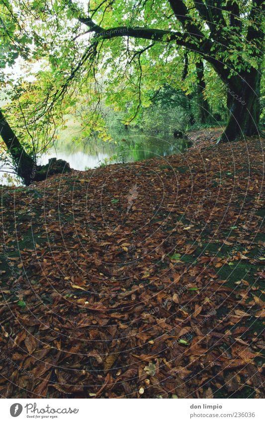 cong woods 3 Ferien & Urlaub & Reisen Umwelt Natur Landschaft Herbst Pflanze Baum Blatt Park Wald Flussufer cong river Cong co. Mayo Republik Irland braun grün