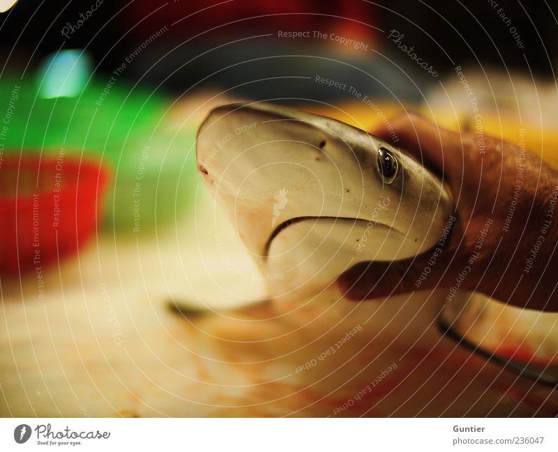 Hai,... Hand weiß grün rot Meer Tier schwarz Tod Auge Lebensmittel braun Wildtier Nase Fisch Jagd Handel