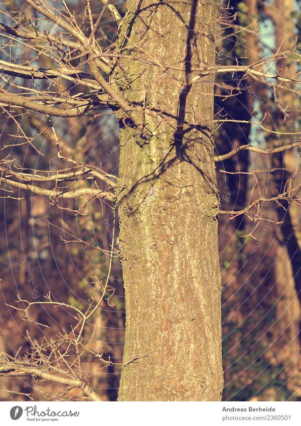 Baumstamm im Winter Natur schön Wald kalt Hintergrundbild Park retro Schönes Wetter planen altehrwürdig Umweltschutz Material