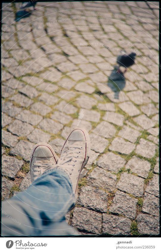 Kleinstadtdschungel Beine Fuß Pflastersteine Kopfsteinpflaster Jeanshose Schuhe Chucks Tier Taube sitzen einzigartig Vignettierung Rahmen beobachten Vogel