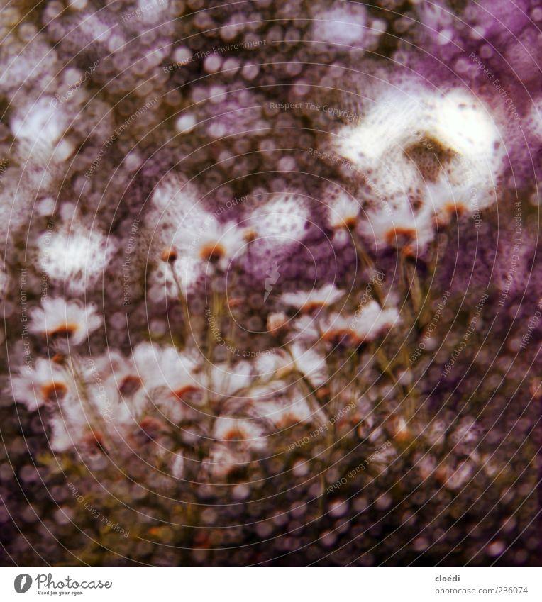 frühlingsregen Wasser weiß Pflanze Sommer Frühling Blüte Kunst Glas außergewöhnlich Wassertropfen violett Frühlingsgefühle