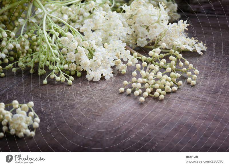 Holunderblüten weiß Pflanze Blüte Frühling Gesundheit frisch authentisch liegen natürlich Duft Holunderblüte