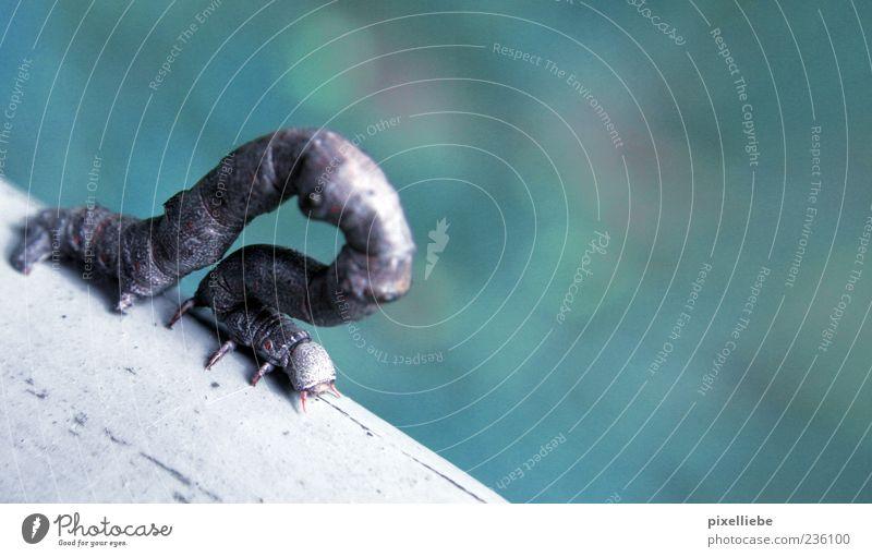 In der Arche ist der Wurm drin Garten Natur Brückengeländer Tier Wildtier Krallen Fährte Kriechspur krabbeln Insekt 1 Holz Streifen wandern gruselig hässlich