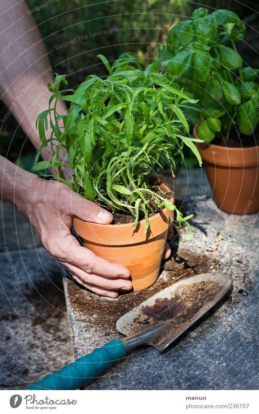 Umtopfen Hand Pflanze Ernährung Lebensmittel Erde Freizeit & Hobby natürlich maskulin Finger authentisch Häusliches Leben festhalten berühren Kräuter & Gewürze