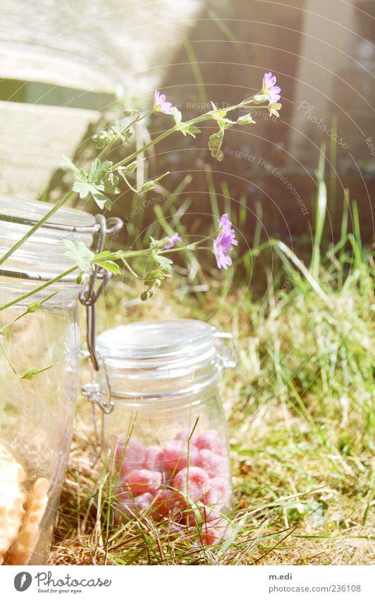 süßer garten Süßwaren Natur Pflanze Sommer Blume Einmachglas Farbfoto Außenaufnahme Tag Licht 1 außergewöhnlich Menschenleer Gras Wiese Bonbon rot