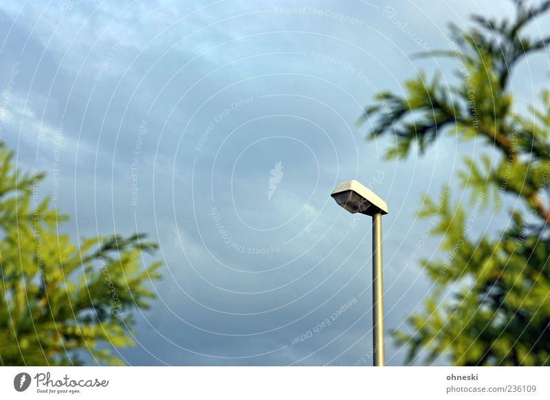 Laterne Himmel Wolken Pflanze Zypresse grün Straßenbeleuchtung Laternenpfahl Farbfoto Außenaufnahme Textfreiraum oben Abend Schwache Tiefenschärfe Menschenleer