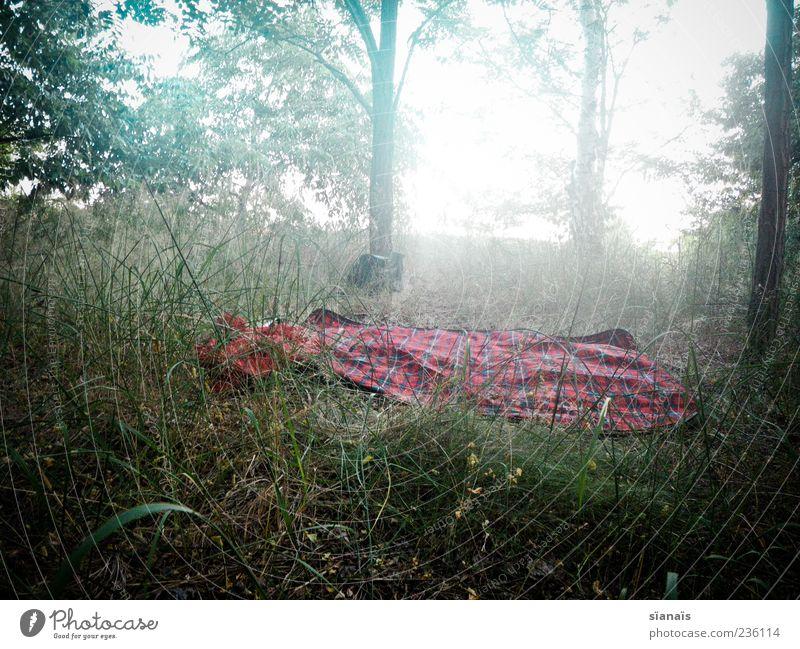 verliebter ort Ferien & Urlaub & Reisen Ausflug Camping Umwelt Natur Landschaft Sommer Nebel Wiese Wald kalt träumen Einsamkeit ruhig Picknick Decke Farbfoto