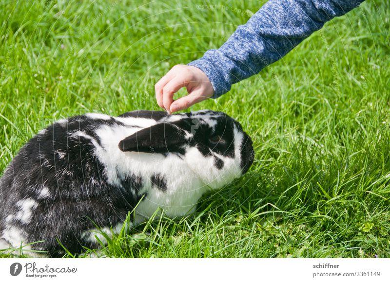 Kurioses | Angsthase Arme Hand Tier Haustier Zoo Streichelzoo 1 grün schwarz weiß ducken Streicheln Hase & Kaninchen Osterhase Ostern Schwarzweißfoto