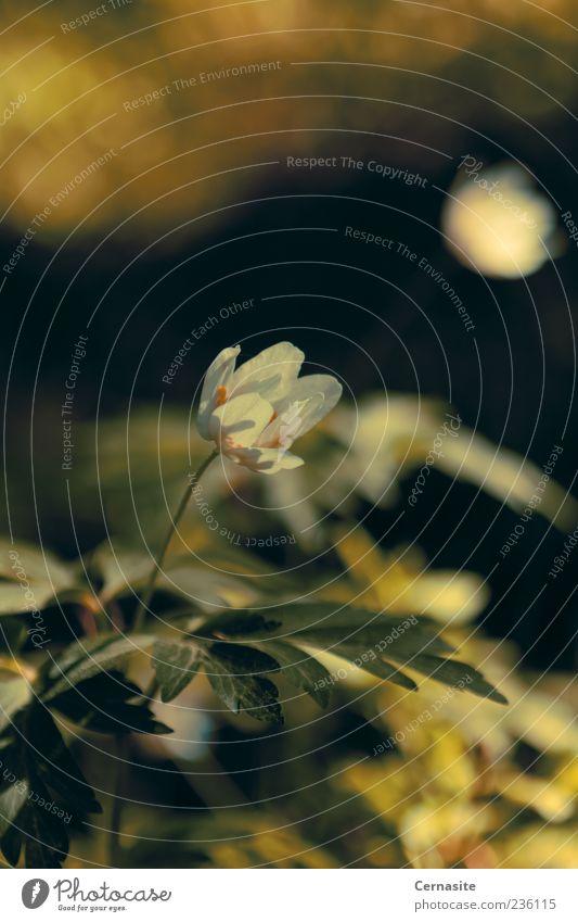 Alte Wiese Natur Pflanze Sonnenlicht Frühling Schönes Wetter Blatt Blüte Feld alt ästhetisch authentisch Duft dunkel dünn nah natürlich schön wild weich braun