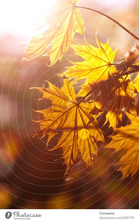 Natur schön Baum Pflanze Blatt gelb dunkel Wiese Wärme Gefühle braun Stimmung Feld gold wild natürlich