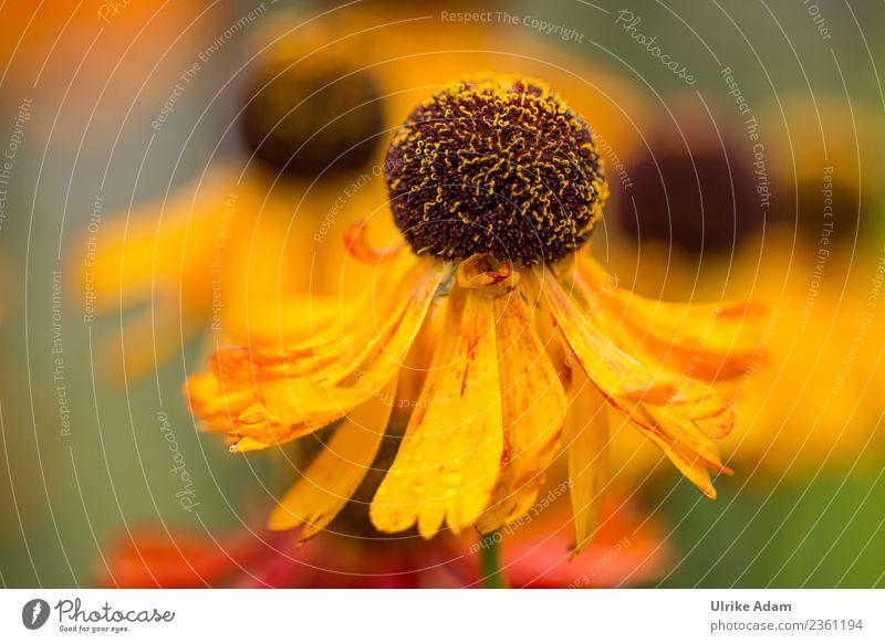 Blüten im Sommer Natur Pflanze Blume Erholung ruhig Leben gelb Herbst Garten Zufriedenheit Park Dekoration & Verzierung Geburtstag Blühend