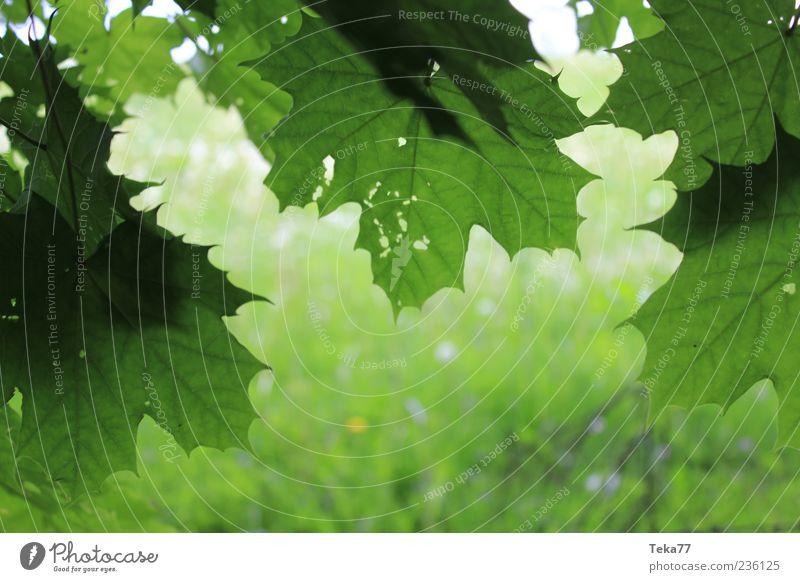 Frühlingsformen Natur grün schön Pflanze Blatt Umwelt Gras ästhetisch Schönes Wetter Frühlingsgefühle