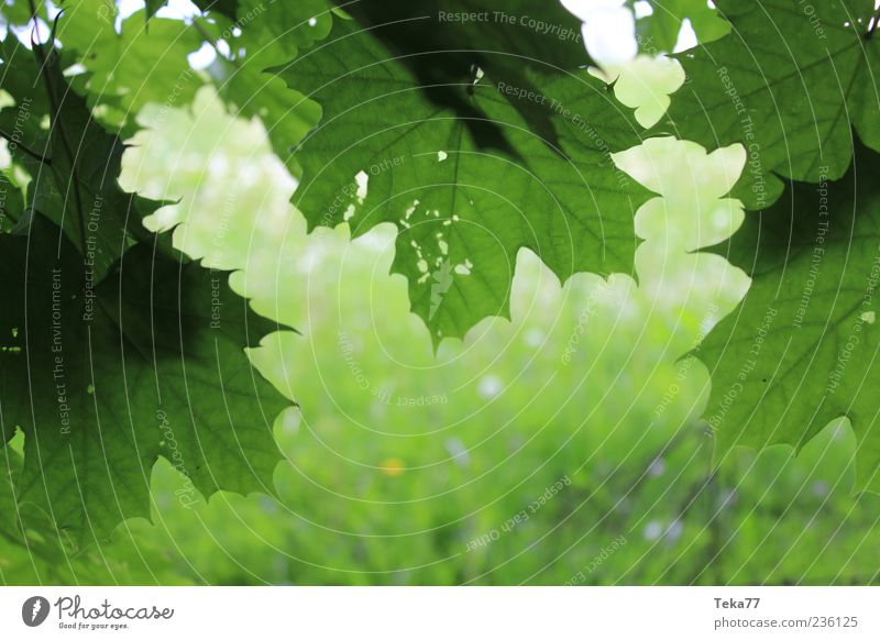 Frühlingsformen Natur grün schön Pflanze Blatt Umwelt Gras Frühling ästhetisch Schönes Wetter Frühlingsgefühle