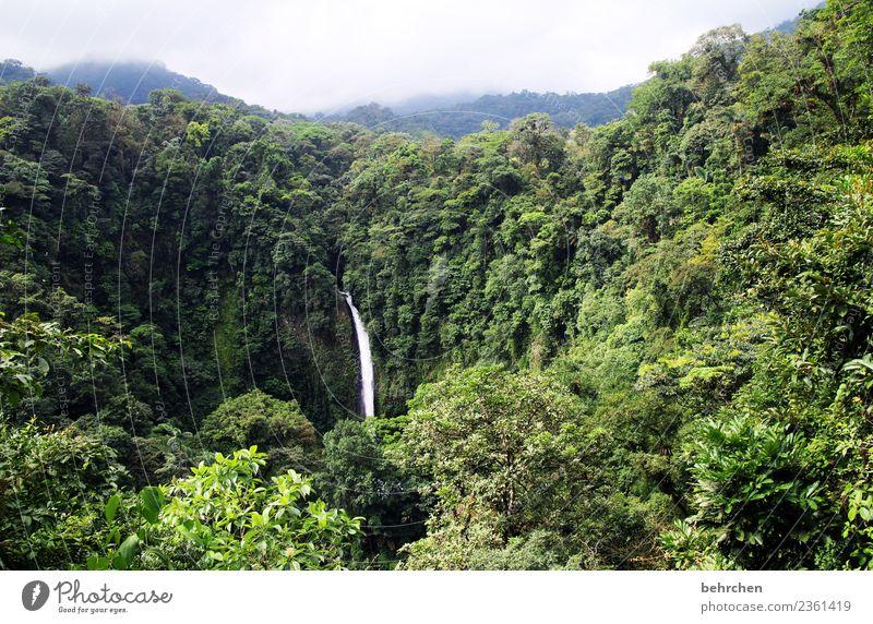 durchatmen Ferien & Urlaub & Reisen Tourismus Ausflug Abenteuer Ferne Freiheit Umwelt Natur Landschaft Pflanze Wolken Klimawandel Baum Blatt Urwald Costa Rica
