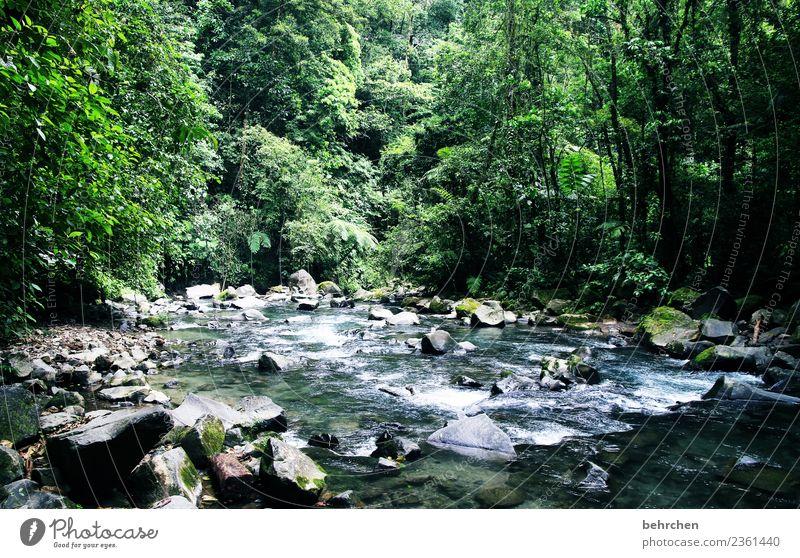 die geschichte des wassers Natur Ferien & Urlaub & Reisen schön grün Wasser Landschaft Baum Erholung Tier Ferne Wald Umwelt Tourismus Freiheit Stein Felsen