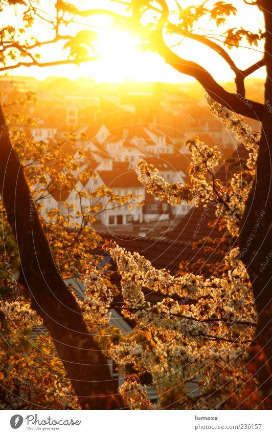 stavanger Stadt schön Ferien & Urlaub & Reisen Haus gelb Frühling Gebäude Europa Blühend Norwegen Skandinavien Kirschblüten Stavanger