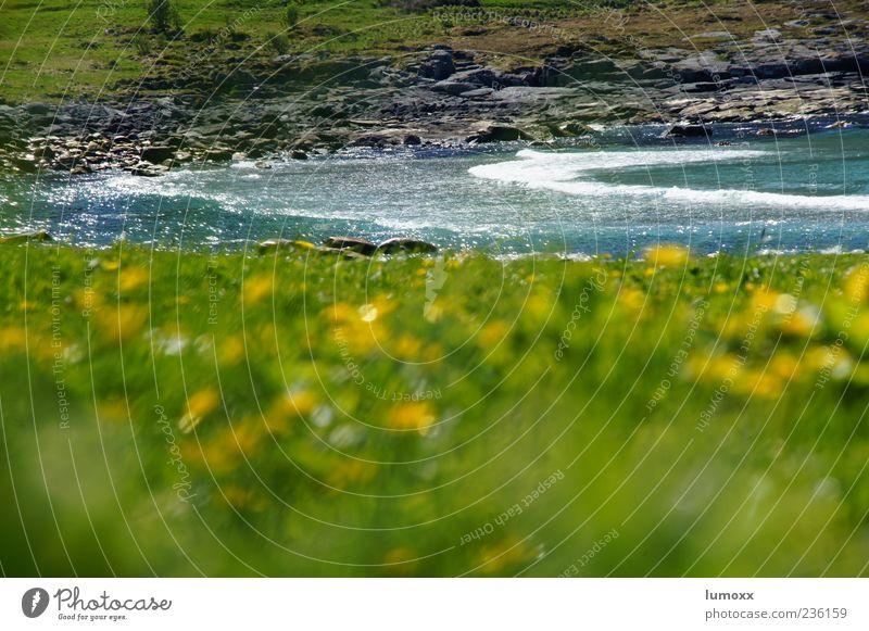 soul kiss Natur blau Wasser grün Meer Sommer Landschaft Gras Küste Wellen natürlich Europa Bucht Norwegen Skandinavien